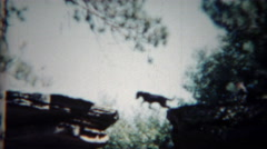 1954: Performance actor stunt leopard animal jumping across cliff for onlookers. Stock Footage