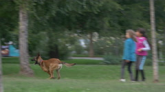 Dog running in the park in Bucharest - stock footage