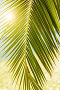 Tropical Beach,Summer Travel Destination with green palm tree branches,beauti Stock Photos