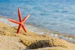 Stock Photo of Starfish on the sandy beach, Summer travel, tourist destination