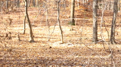 Couple walking in the woods Stock Footage