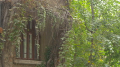 An old house's window covered with green plants in Bucharest Stock Footage