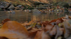 Leaves fall in the stream and float on surface. River water gurgling in nature. Stock Footage