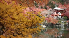 Autumn season,The leave change color of red in Temple japan Stock Footage