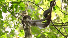 Snake in the trees Stock Footage