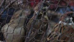 MCU birds seen in a cage in Asia Stock Footage