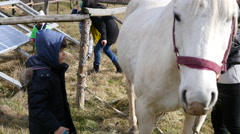 Kid cleans a horse in rehabilitation center for children retarded development Stock Footage