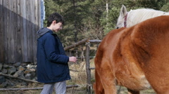 Kid feed a horse in rehabilitation center for children with retarded development Stock Footage