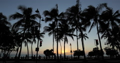 Palm trees in evening sunset in Waikiki beach Stock Footage