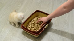 Woman teaches the kitten to toilet Stock Footage