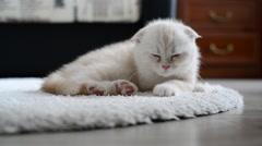 Ginger kitten slumber on  carpet Stock Footage