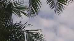 Looking up at Palms Stock Footage