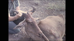Vintage 16mm film, 1972, Kenya, hunters and dead gazelle Stock Footage