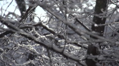 Panorama of the Winter Forest. Stock Footage