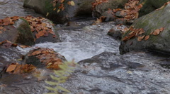 Fast river water splashing big stones, close up, fallen yellow leaves, autumn. Stock Footage