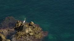 egret on rocks - stock footage