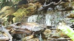 Lush green tropical garden waterfall - stock footage
