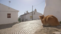 Cat in Cacela Velha village in Portugal Stock Footage