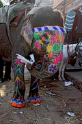 Traditional Indian painted elephant Stock Photos