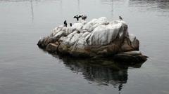Black Cormorants And Pelican Standing On Rock Stock Footage