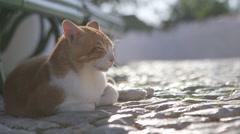 Sleeping cat outdoors Stock Footage