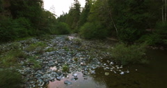 Enter the Shallow River Stock Footage
