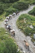 Horses laden with baggage climb the mountain - stock photo