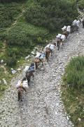 Stock Photo of Horses laden with baggage climb the mountain