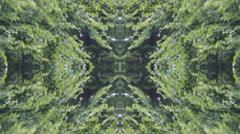 Park Nature  Park Abstract  Kaledioscope  04 Stock Footage