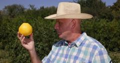 Farmer Verify Close Grapefruit Sour Bitter Juicy Tasty Delicious Citrus Fruit Stock Footage
