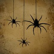 spiders - stock illustration