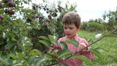 Toddler boy grabs an apple from a tree and holds it up - stock footage