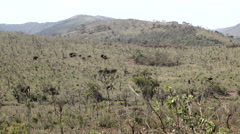 Hluhluwe imfolozi park landscape with a herd of elephants Stock Footage