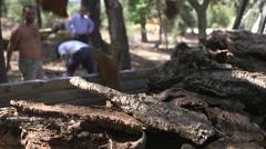 Loading truck with oak bark cork Stock Footage