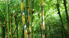Bamboo forest by slider footage shot Stock Footage