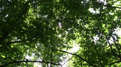 Looking towards the sun that shines through the leaves 61 Stock Footage