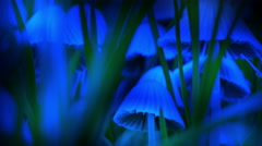 Blue Towering glowing blue mushrooms in grass zoom in psychedelic 4k Stock Footage
