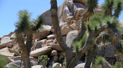 Joshua Tree National Park, California Desert Landscape 4K UHD Stock Footage