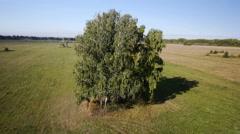 Aerial: flight over beautiful green tree at golden summer field Stock Footage