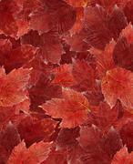 Carpet of leaves - stock illustration