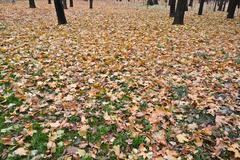 Fallen leaves on the grass in autumn Park. - stock photo