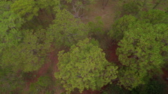 Aerial view of forest Da lat in Vietnam - stock footage