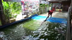 Man dragging crocodile from the water using his hand at khaoyai floating market Stock Footage