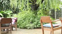 Big tree in tropical garden Stock Footage