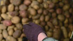 A lot of potatoes and a woman - stock footage