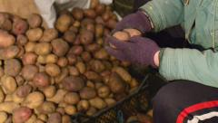 A woman in a hat holding a potato - stock footage