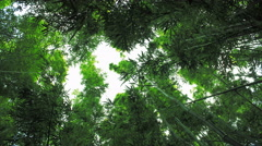 Maui, Hawaii Hidden Peaceful Bamboo Forest 4K UHD Stock Footage