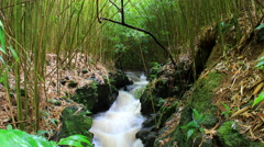 Maui, Hawaii Peaceful Bamboo & Stream Timelapse 4K UHD Arkistovideo