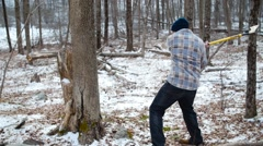 Lumberjack Chops Tree with Axe in Long Shot Stock Footage