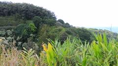 Maui, Hawaii Panning Coastline & Forest Jungle Timelapse 4K UHD Stock Footage